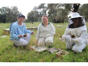 Kadınlar arıcılığa merak sardı, Aydın ana arı üretim merkezi oldu