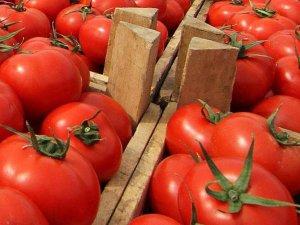Rusya, 21 ton domatesi geri gönderdi