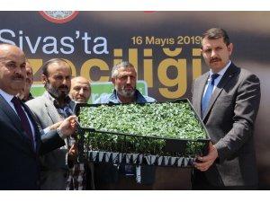 Sivas'ta sebze fidesi dağıtıldı