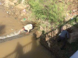 Akıntıya karşı yüzerken görüntülenmişlerdi, bazı kişiler elleri ile avladı