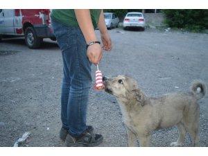 Sıcaktan bunalan köpeğe dondurma yedirdi