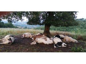 Ağaca yıldırım düştü, 10 inek telef oldu