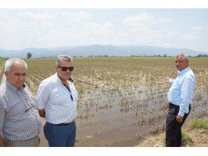 Aydın çiftçisi 30 bin dönüm alanda 40 milyon lira zararda
