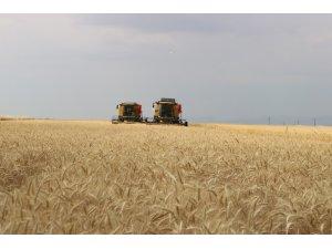 Vali Güzeloğlu, Diyarbakırlı çiftçilerin hasat törenine katıldı