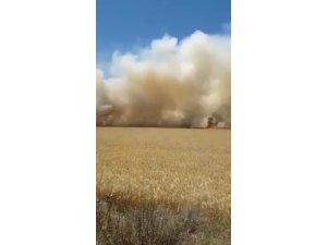 18 dönümlük buğday tarlası tamamen yandı