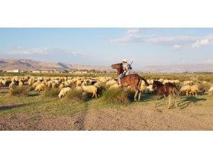 Orta Asya'nın bozkırları değil, Erciyes Dağı'nın etekleri