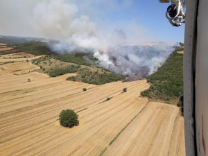 Gelibolu'da anız yangını ormana sıçradı