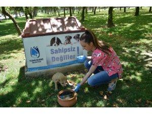 Yunusemre yaz aylarında sokak hayvanlarını unutmadı