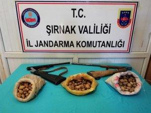 Şırnak'ta toplanması yasaklanan sahlep soğanı ele geçirildi
