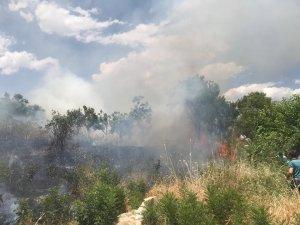 Fıstık bahçelerine sıçrayan yangın bir çok ağacın yanmasına neden oldu