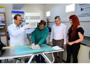 Yaralı hayvanlar profesyonel cihazlarla tedavi ediliyor