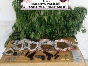 Sakarya'da jandarmadan esrar ve kenevir operasyonu: 2 gözaltı