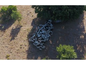 Kayıp hayvanlar drone'la bulundu