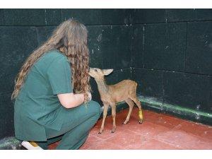 Hasta ve yaralı yaban hayvanları bu merkezde şifa buluyor