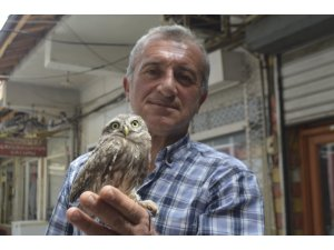 Sokakta bulduğu yavru baykuşu yetkililere teslim etti
