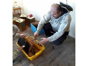 Ordu'da kestane balı hasadına başlandı