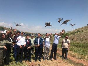 Kırıkkale'de 2 bin keklik doğaya bırakıldı