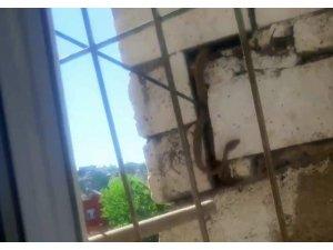 Siirt'te duvara gizlenmiş 2 metrelik yılan korkuttu