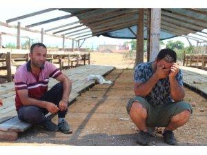 Antalyada kiralık tır şoförünün 25 büyükbaş hayvanla ortadan kaybolduğu iddiası