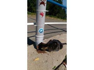 Sokak hayvanları için suluk ve yemlik