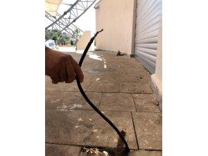 Açıkta kalan elektrik kabloları tehlike saçıyor
