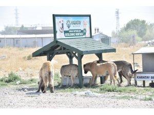 Sokak hayvanları için yeni beslenme istasyonları kuruluyor