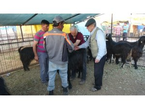 Uşak canlı hayvan pazarında Arife bereketi