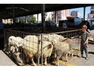 Elde kalan kurbanlıkları Et ve Süt Kurumu satın alacak
