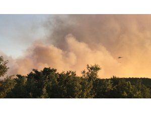 Eskişehir'de orman yangını