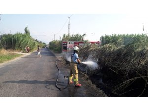 Burhaniye'de sazlık yangını