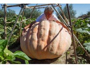 İspanyol çiftçi 215 kiloluk dev kabak yetiştirdi