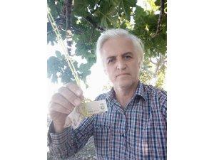 Kopardığı incir için ağaca para astı