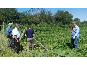 Pazaryeri'ndeki tarım arazilerinde hasar tespit çalışmaları başladı
