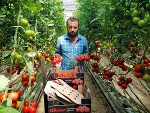 Yozgat'ta jeotermal serada yılın 12 ayı domates üretiyorlar