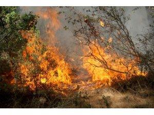 Muğla'da yanan ormanların yerine yeni fidanlar dikilecek