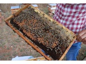 Bakanlık önlem aldı, arı ölümleri azaldı