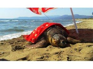 Yarası nedeniyle denize dönemeyen Caretta caretta koruma altına alındı