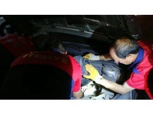 Isparta'da yavru kedi kurtarma operasyonu