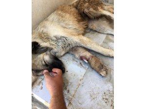 HDP'li belediye Mardin'de hayvanlara dehşeti yaşatmış