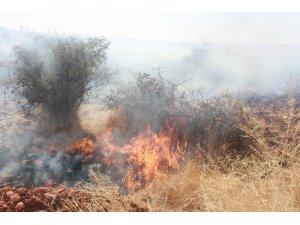 Adıyaman'da, orman yangını korkuttu