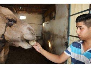 Lise öğrencisi tatilini develere ayırdı