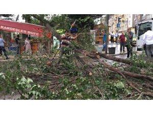 Fırtınanın yıktığı ağaç büfenin üzerine devrildi