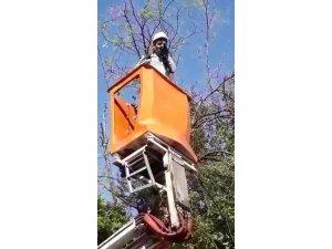 Diyarbakır'da ağaca takılan kumruyu Dicle Elektrik ekipleri kurtardı