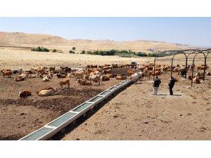 Hayvanların su ihtiyacı güneş enerjisinden