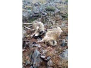 Sürüye yıldırım isabet etti, 20 koyun telef oldu