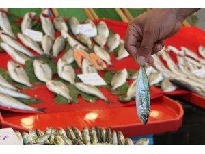 Balık tezgahlarında fiyatlar sezonun ilk gününde cep yakıyor