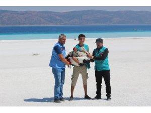 Emine Erdoğan ve Bakan Kurum, Salda Gölü'nde incelemelerde bulundu