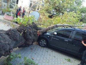 Asırlık çınar ağacı aracın üzerine devrildi