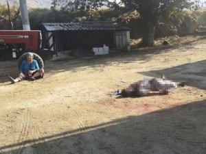 Aydın'da baba-oğul kavgası kanlı bitti! Av tüfeğiyle vurarak öldürdü
