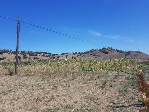 Sungurlu'da telefon kablolarını çaldılar